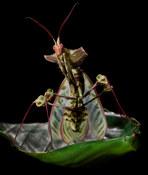 028-insektenfotos-spinnenfotos-gottesanbeterin-fliegen-kaefer-andyhunger.jpg