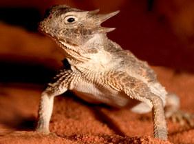 025-echsen-chameleons-geckos-krokodile-andy-hunger.jpg
