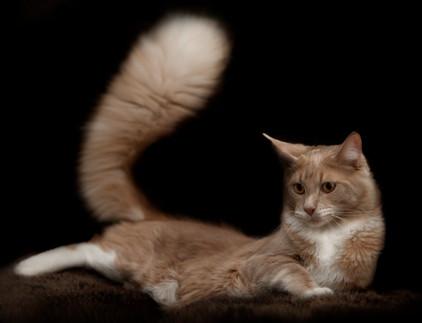 Katzenfotos - Andy Hunger