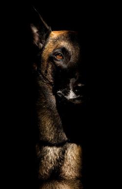 021-hundefotos-hundefotografie-hundebilder-hundeportraits-woelfe-caniden-hundefotograf-hundewelpen.h