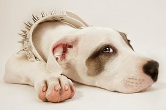 Hundefotos Hundeportraits 053.jpg