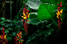 122-landschaftsfotos-naturfotos-pflanzenfotos-botanik-bluetenfotos-andyhunger.jpg