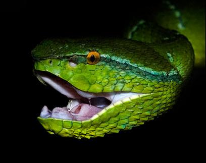 050-schlangenfotos-giftschlangenfotos-reptilienfotos-andyhunger.jpg