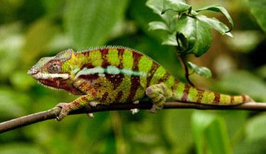 004-echsen-chameleons-geckos-krokodile-andy-hunger.jpg