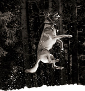 Hundefotos Hundeportraits 033.jpg
