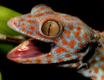 024-echsen-chameleons-geckos-krokodile-andy-hunger.jpg