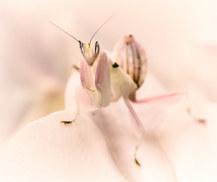 046-insektenfotos-spinnenfotos-gottesanbeterin-fliegen-kaefer-andyhunger.jpg