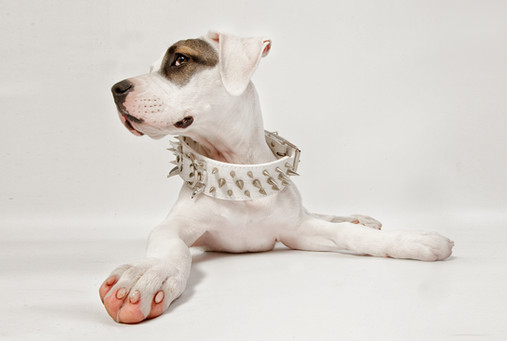 Hundefotos Hundeportraits 054.jpg