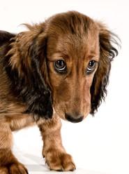 Hundefotos Hundeportraits 059.jpg