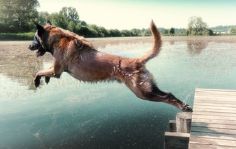 Hundefotos Hundeportraits 018.jpg