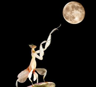 038-insektenfotos-spinnenfotos-gottesanbeterin-fliegen-kaefer-andyhunger.jpg