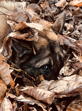 Hundefotos - Andy Hunger