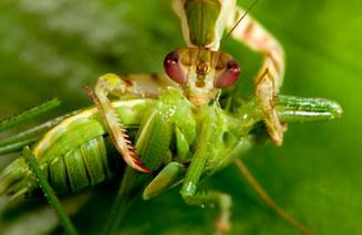 049-insektenfotos-spinnenfotos-gottesanbeterin-fliegen-kaefer-andyhunger.jpg