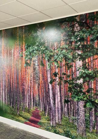Forest Wallpaper.jpg