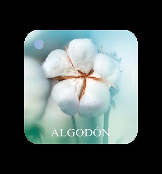 ALGODON.png