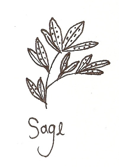 Drawing of sage