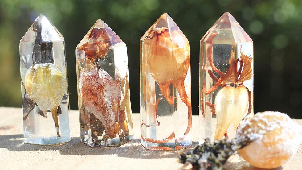 Preserved Kelp Seaweed Crystal