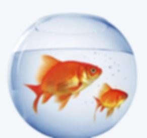 bocal poissons.jpg