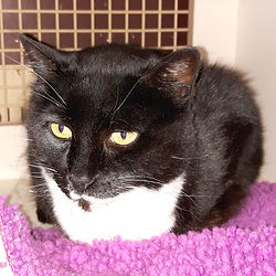 Geraldine is a rescue cat waiting for a loving home.