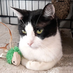 Itty Bit is a rescue cat waiting to be adopted.