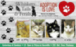 Vacaville cat adoptions by Whiskers Tails & Ferals