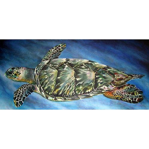 Eretmochelys imbricata (Hawksbill sea turtle)