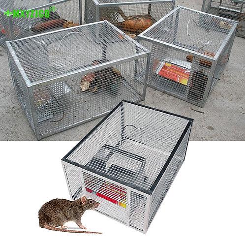 Multi catch rat/squirrel trap