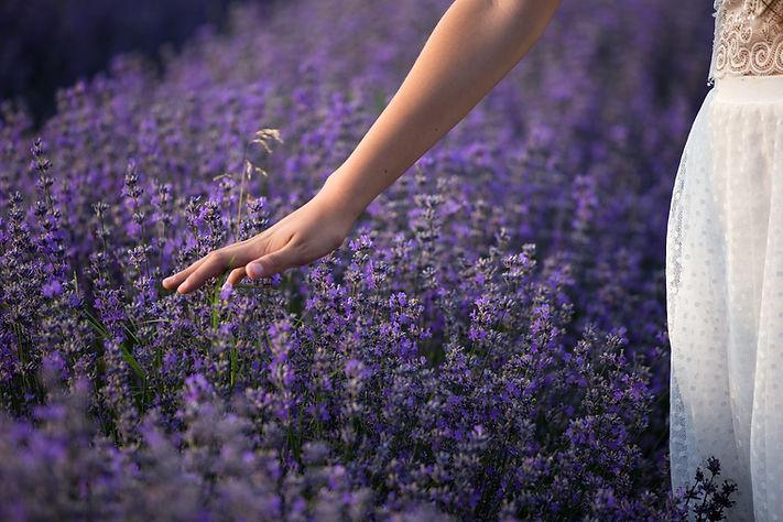 lavender-3576129.jpg