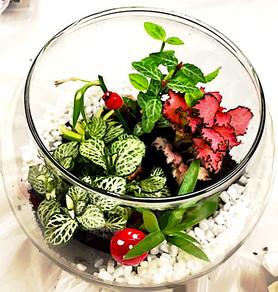 Mums' Brunch Time Club - House Plants Decoration Making