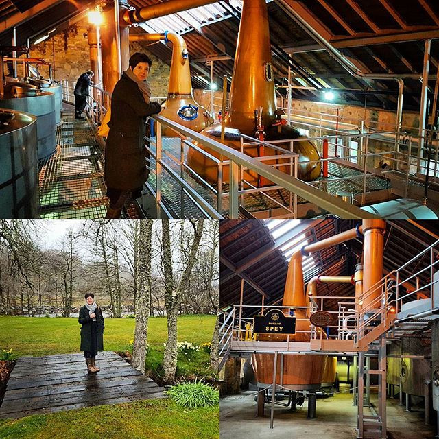 The Speyside Distillery
