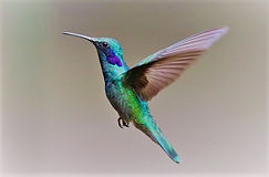 hummingbird-2139279_640.jpg