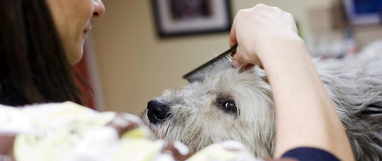 strzyżenie psów kraków, salon urody czterolapa