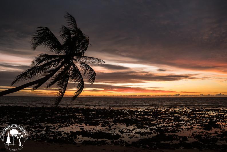 Palma  v západu slunce na ostrově Ko Lanta