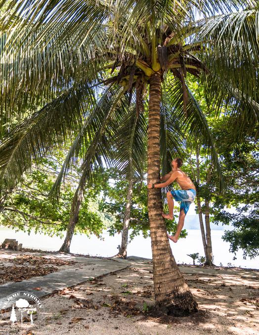 Čerstvé kokosy byly naše téměř každodení osvěžení
