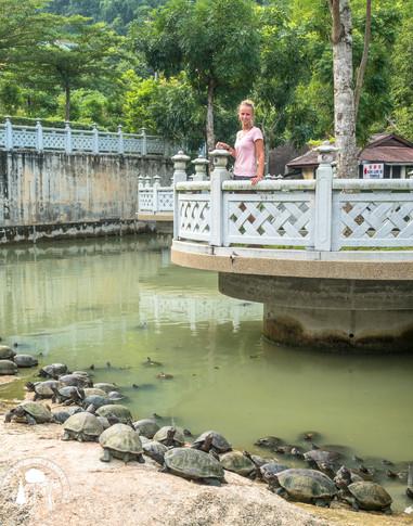 Komplex Kek Lok Si, údajně největší buddhistický chrám jihovýchodní Asie najdete na ostrově Penang