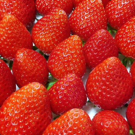 苺の種類 5品種作っています