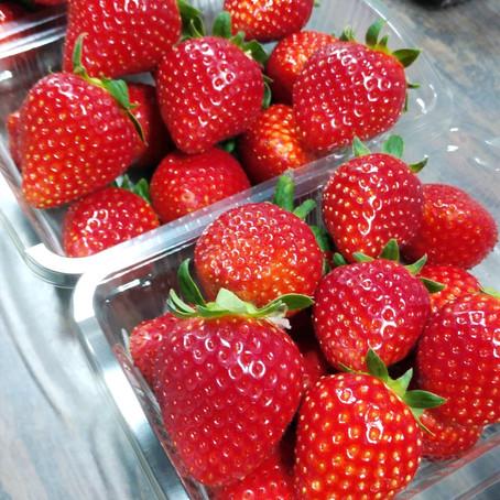 苺の収穫量についてのお知らせ