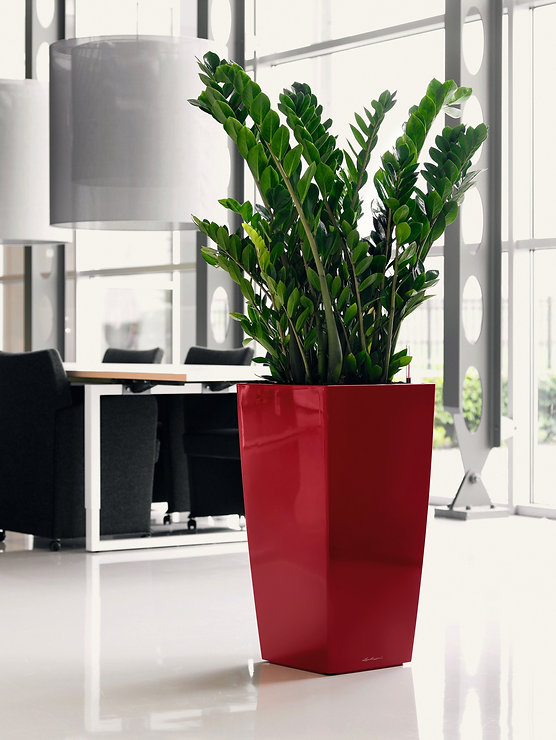 lechuza-cubico-self-watering-planter-lec