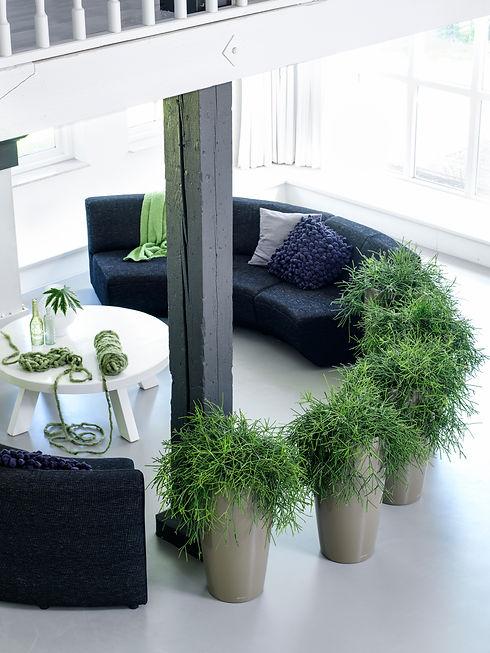 Ki plant_0133.jpg