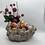 Thumbnail: Grape planter