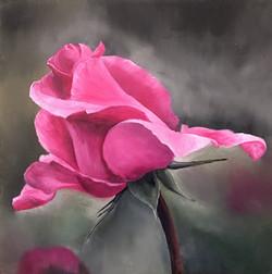 Insyia's Rose