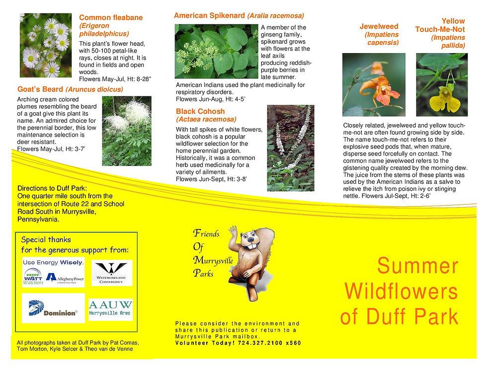 Summer Wildflowers of Duff Park _final d