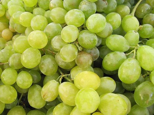 Raisin Blanc - Italia