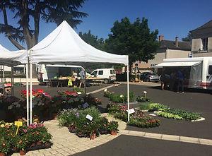 Les Plantes Succulentes - Horticulteur les Ormes - Production naturelle et vente de fleurs et de plants de légumes en direct sur les marchés de Dangé Saint Romain (86) et de Descartes (37)