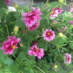 Les Plantes Succulentes - Horticulteur les Ormes - Production naturelle et vente de fleurs et de planst de légumes en direct dans nos serres situées aux Ormes ou sur les marchés de Dangé Saint Romain (86) et de Descartes (37)