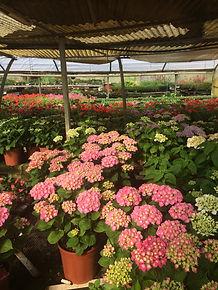 Les Plantes Succulentes - Horticulteur les Ormes - Production naturelle et vente de fleurs et de planst de légumes en direct dans nos serres situées aux Ormes (86)