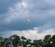 20180728 - Sky Cheifs Fun Fly-35.jpg