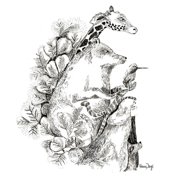 Láminas Ilustradas