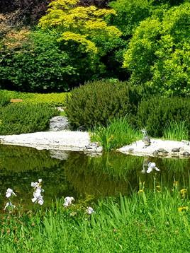 Der japanische Garten und ein Holzdrache