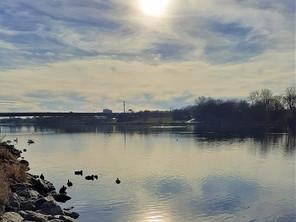 An der neuen Donau
